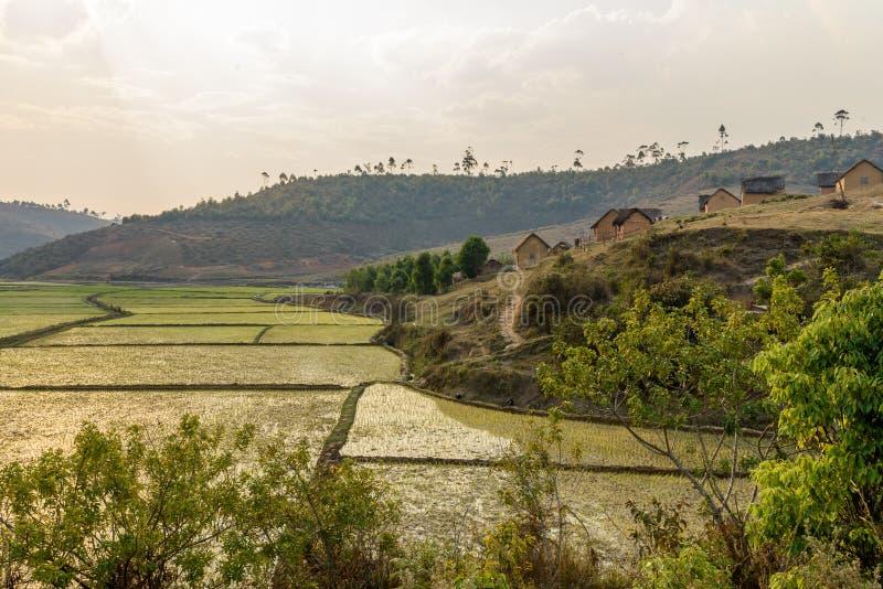 Campos do arroz e desflorestamento, Madagáscar foto de stock