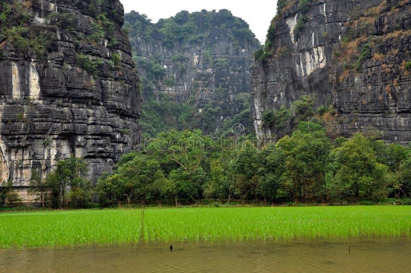 Campos do arroz e penhascos da pedra calcária, Tam Coc, Vietname fotos de stock royalty free