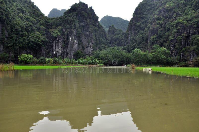 Campos do arroz e penhascos da pedra calcária, Tam Coc, Vietname fotografia de stock royalty free