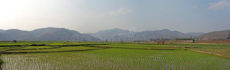 Campos do arroz em Myanmar foto de stock