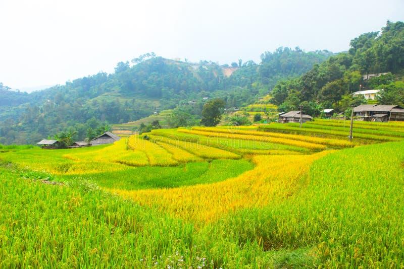 Campos do arroz em terraced Os campos são preparados plantando o arroz Proibição Phung, Huyen Hoang Su Phi, província de Ha Giang foto de stock
