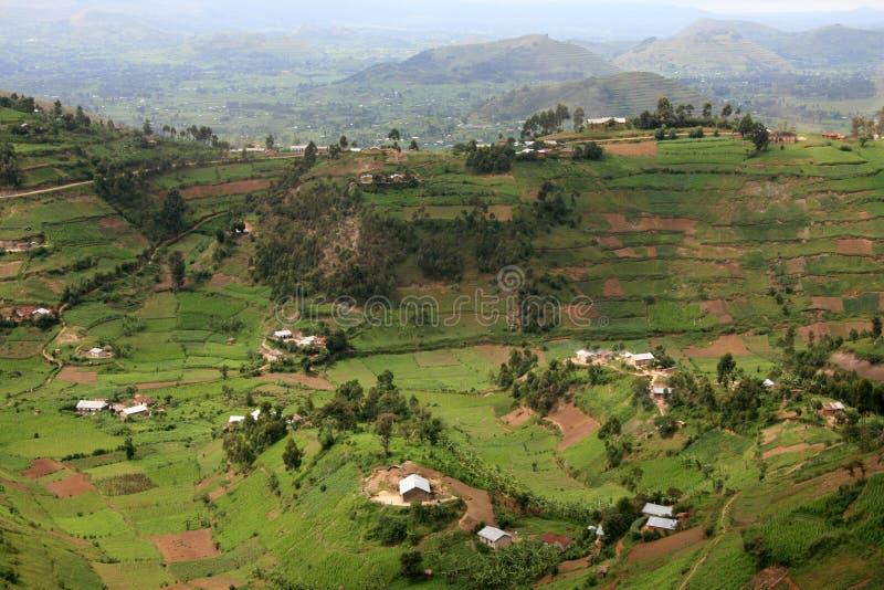 Campos do arroz em Uganda, África fotografia de stock royalty free