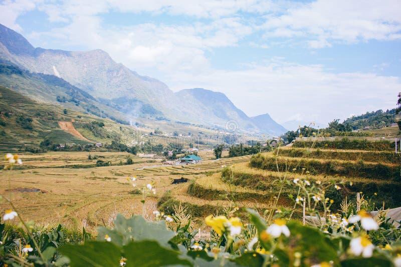 Campos do arroz em Vietnam imagem de stock royalty free