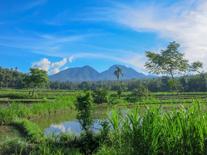 Campos do arroz inundados com ?gua Vegeta??o tropical lux?ria A árvore de coco e a selva estão na distância Panorama da montanha foto de stock royalty free