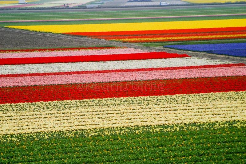 Campos do bulbo, Holanda, Keukenhof fotos de stock