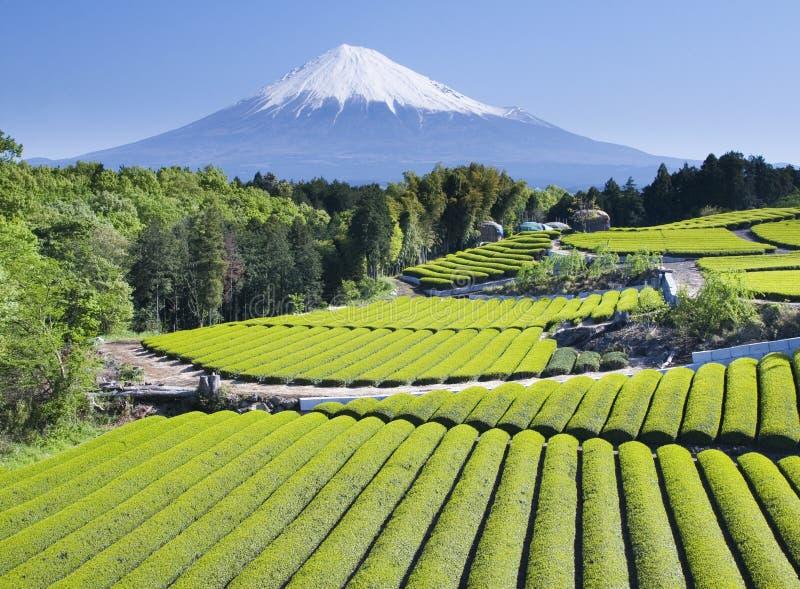 Campos do chá verde imagem de stock royalty free