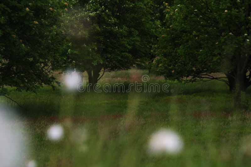 Campos do dente-de-leão imagem de stock