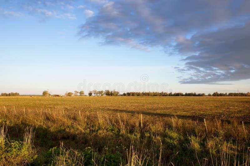 Campos do pasto da paisagem em Argentina fotografia de stock royalty free