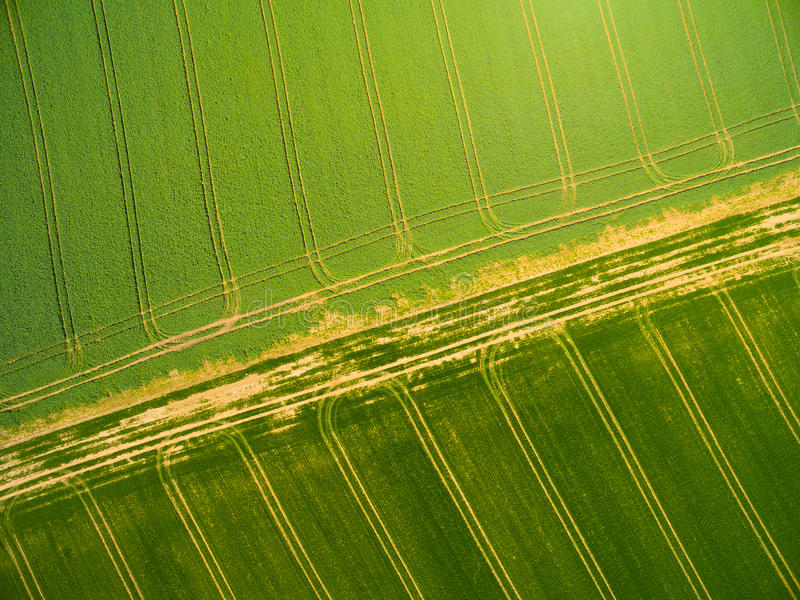 Campos do trigo e da colza com trilhas do trator foto de stock