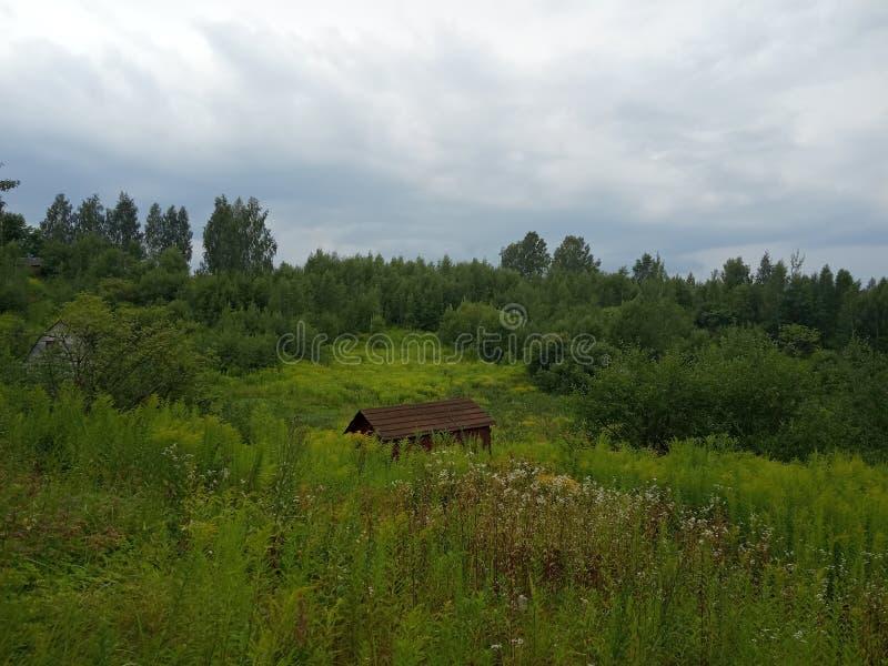 Campos do verão antes da chuva imagem de stock