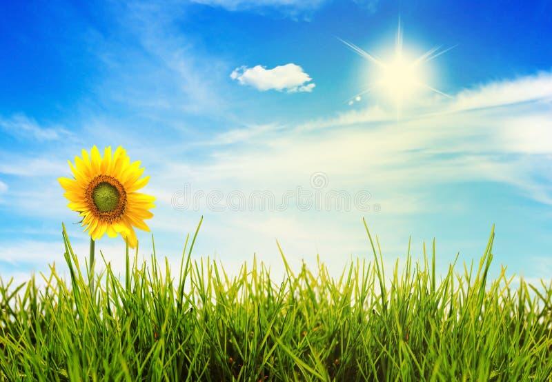 Campos do verde da paisagem do verão e céu bonito fotos de stock royalty free