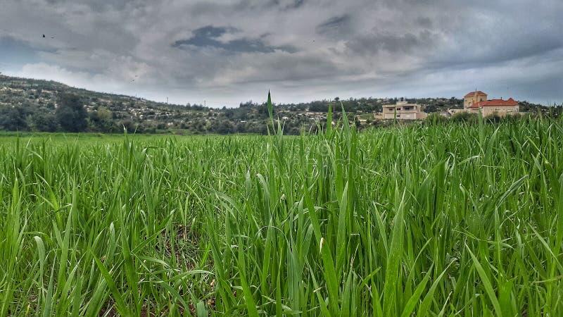 Campos dos verdes manchados em Akkar ao norte de Líbano na estrada Líbano no Médio Oriente é bonito fotos de stock