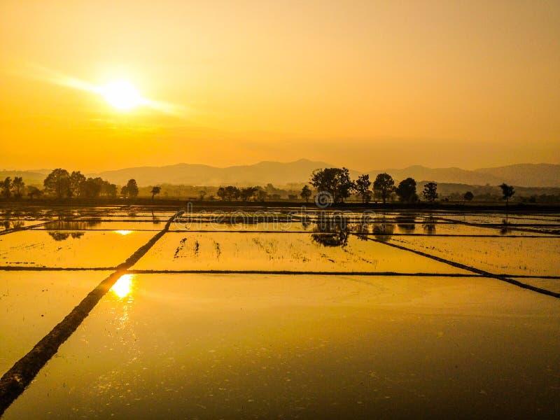 Campos dourados do arroz fotografia de stock