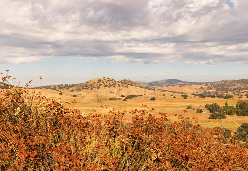 Campos dourados, trigo mourisco, carvalhos, nuvens de chuva do trovão imagens de stock royalty free