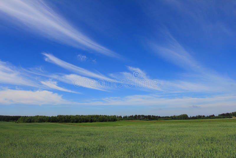 Campos e céu azul imagens de stock