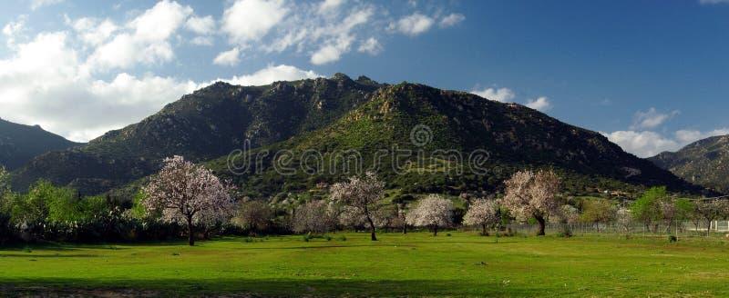 Campos e montanhas verdes florescidos das árvores fotografia de stock royalty free