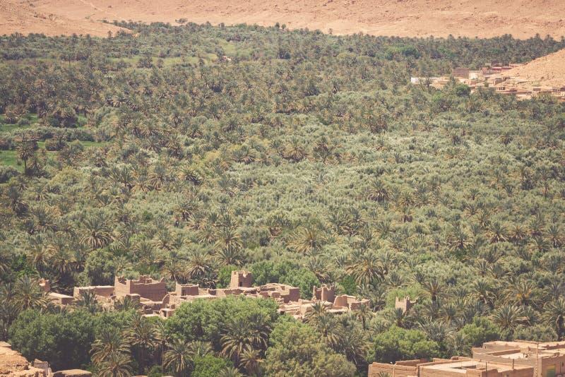 Campos e palmas cultivados no Norte de África A de Errachidia Marrocos imagens de stock