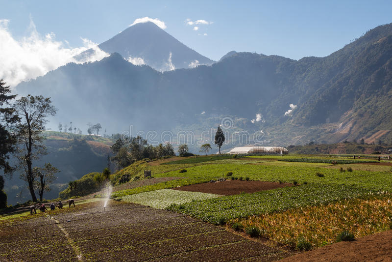 Campos en Guatemala central fotos de archivo libres de regalías