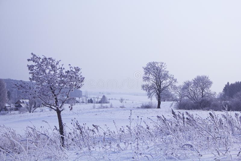 Campos en la estación del invierno foto de archivo