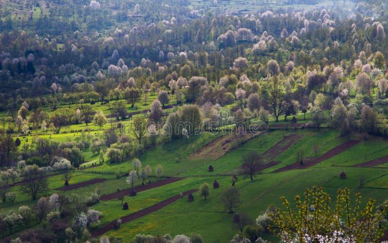 Campos en primavera imagen de archivo libre de regalías