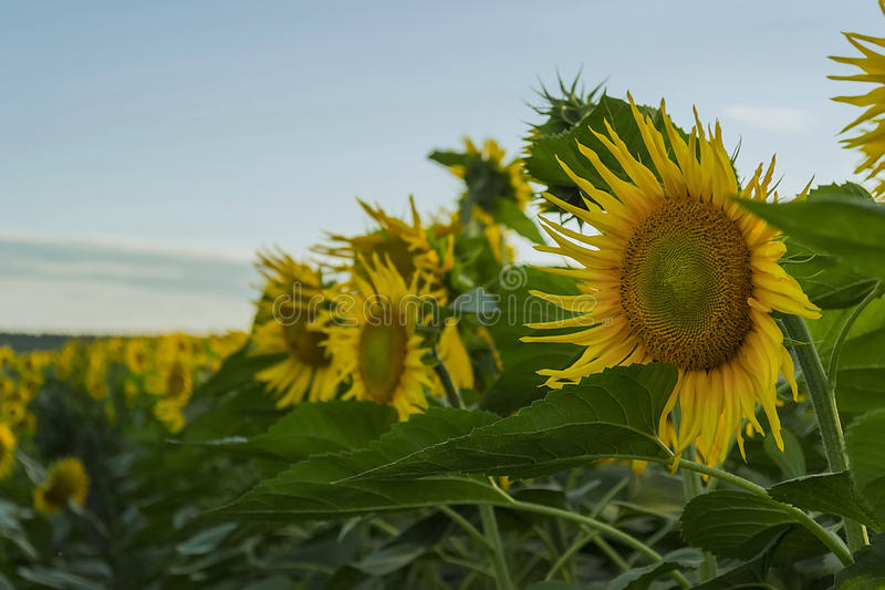 Campos enchidos com a luz solar foto de stock royalty free