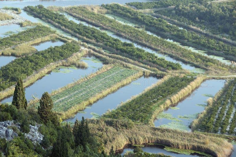 Campos fértiles en el delta del río de Neretva en Croacia imagen de archivo