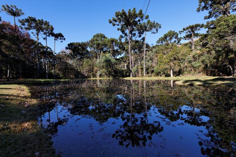 Campos fa il lago Sao Paulo Brasile Jordao immagine stock