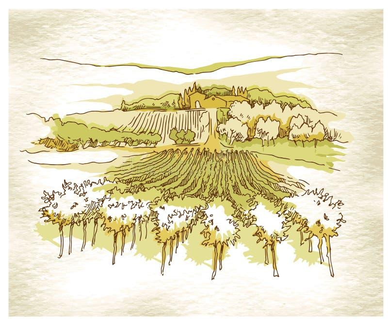 Campos feitos à mão e vinhedos da uva do esboço ilustração stock