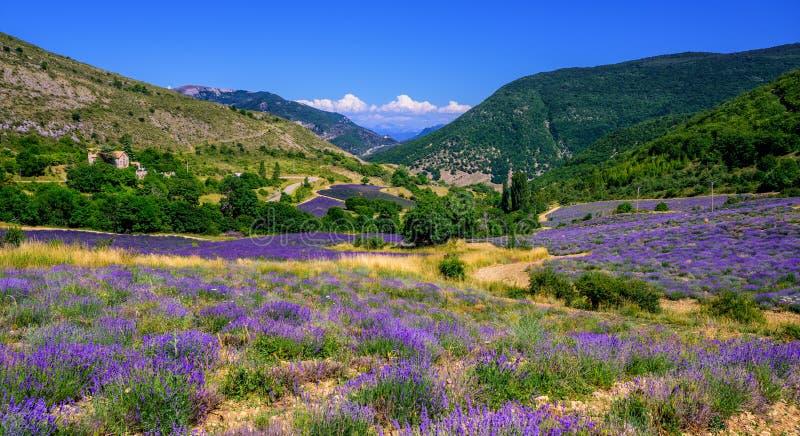 Campos florecientes de la lavanda en Provence, Francia imagen de archivo libre de regalías