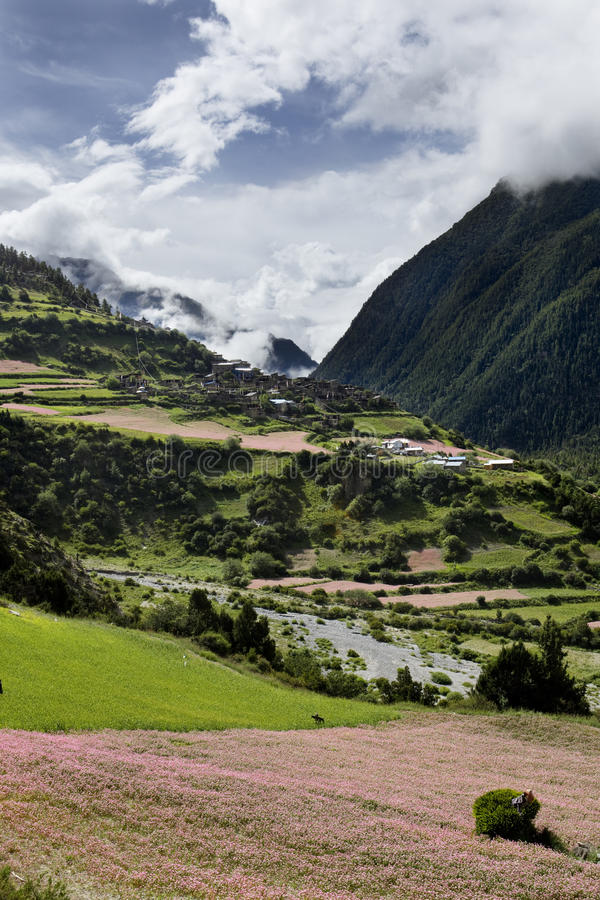 Campos florecientes de Nepal imagenes de archivo