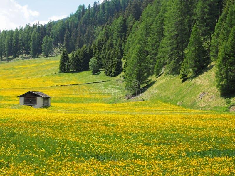 Campos floridos entre os cumes imagem de stock