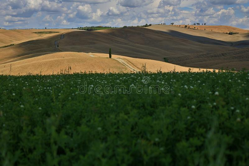 Campos hermosos de Toscana en San Quirico d 'Orcia foto de archivo