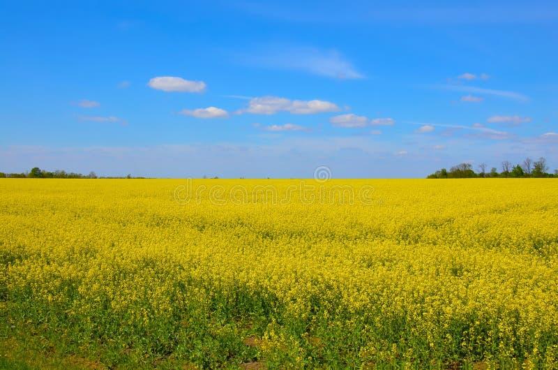 Campos ilimitados de Ucrânia imagens de stock royalty free