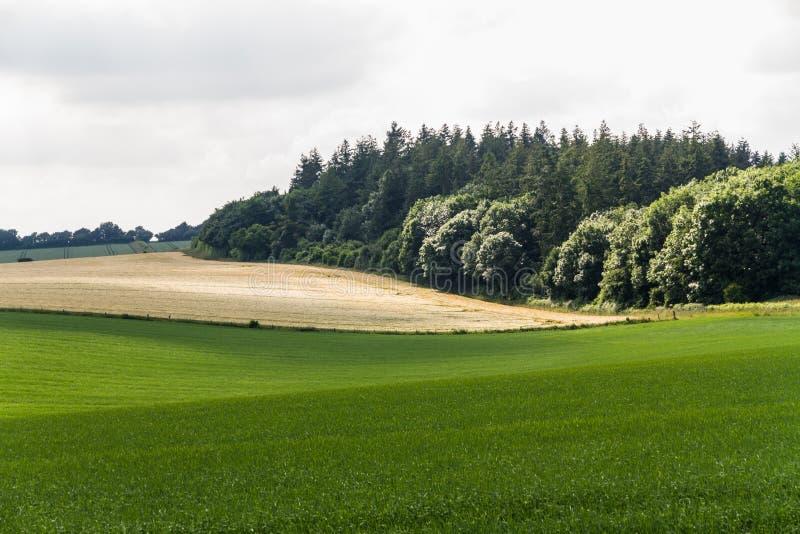Campos ingleses del verde del campo imágenes de archivo libres de regalías