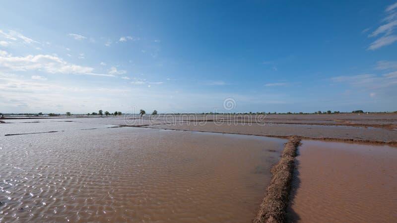 Campos inundados do arroz em Cambodia foto de stock royalty free