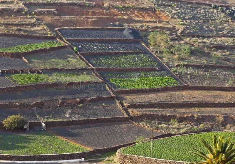 Campos lavrados na área montanhosa rural em Lanzarote fotografia de stock