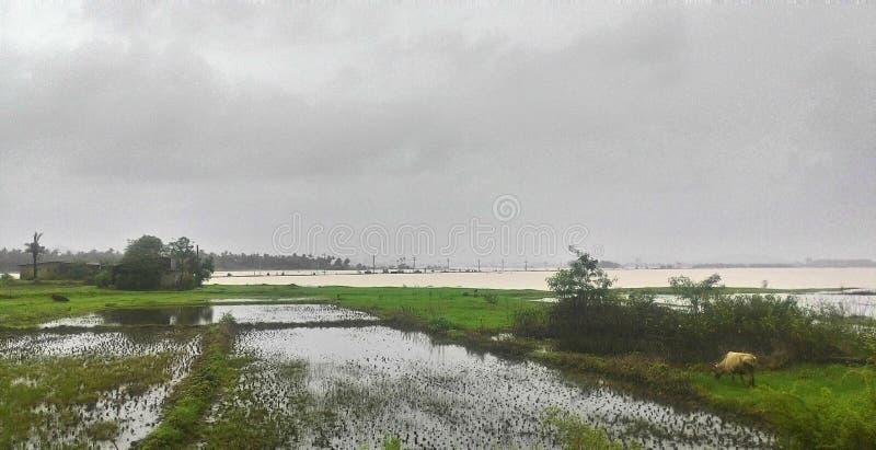 Campos llenados de agua foto de archivo