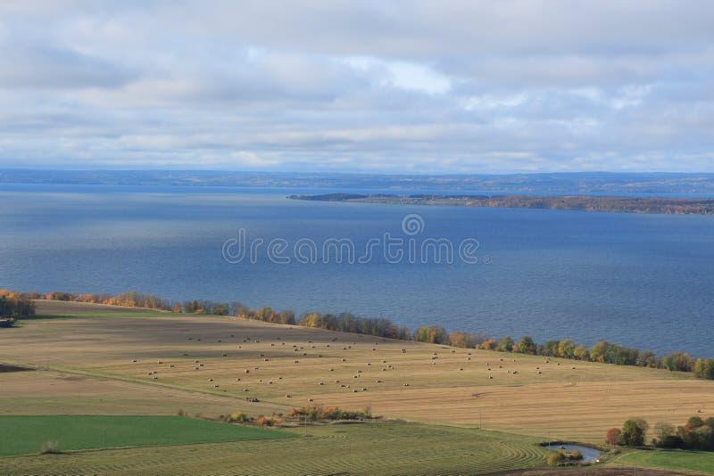 Campos na costa do lago fotografia de stock