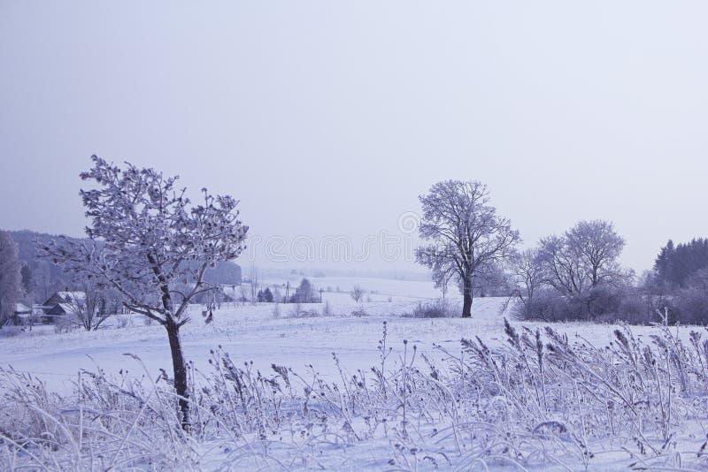 Campos na estação do inverno foto de stock