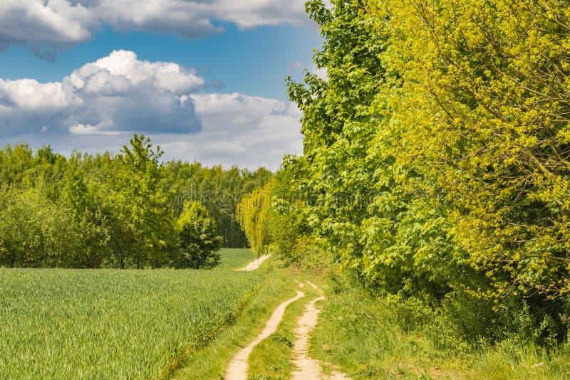 Campos no limite de cidade entre Berlim e Brandemburgo, Alemanha Sobre a paisagem, as nuvens brancas podem ser vistas em um azul  fotografia de stock royalty free
