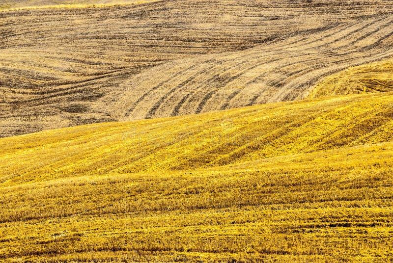 Os campos aproximam Montalcino (Toscânia) foto de stock royalty free