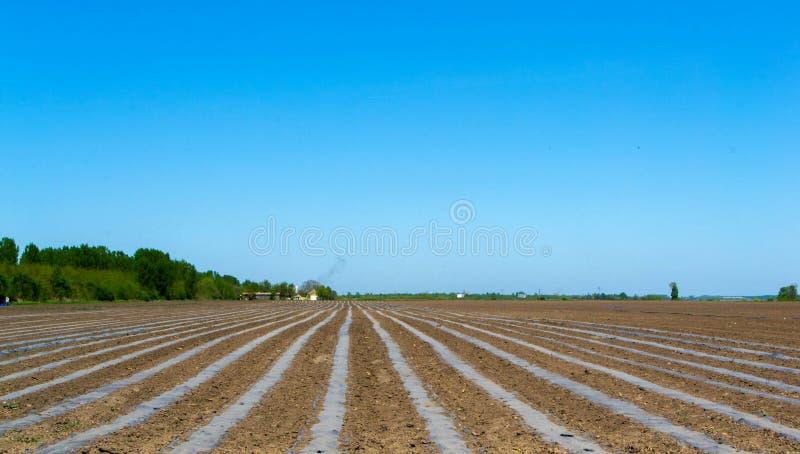 Campos plantados com batatas imagem de stock