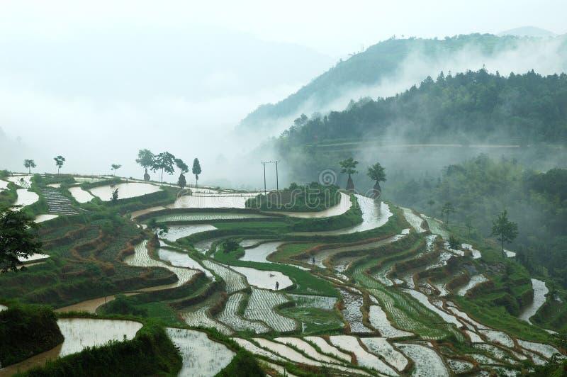 Campos terraced de Mingao fotos de stock