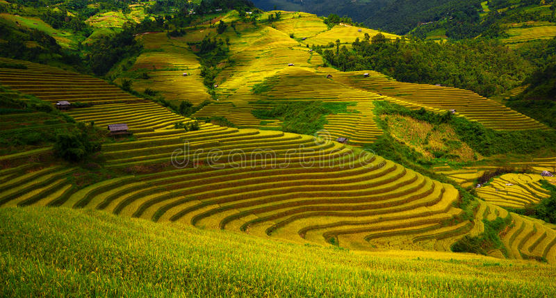 Campos Terraced do arroz foto de stock royalty free