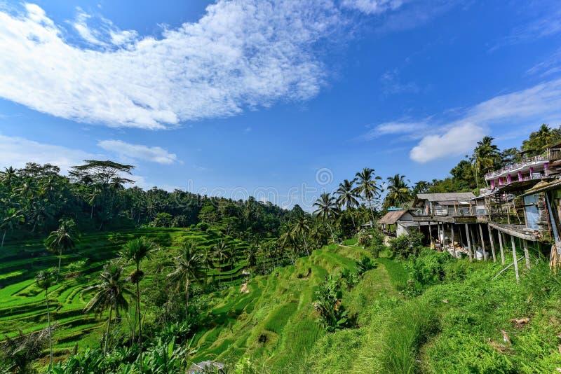 Campos Terraced na ilha de Bali imagens de stock royalty free