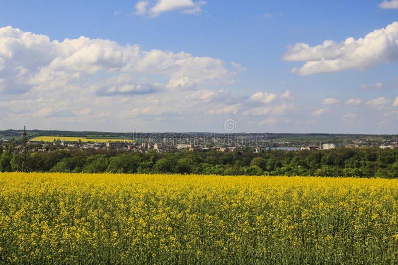 campos ucranianos f?rtiles hermosos foto de archivo libre de regalías
