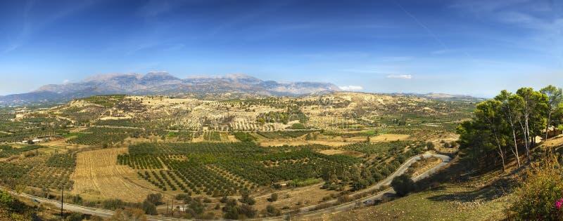 Campos verde-oliva imagem de stock