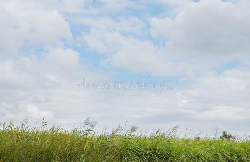 Campos verdes com céu claro imagem de stock