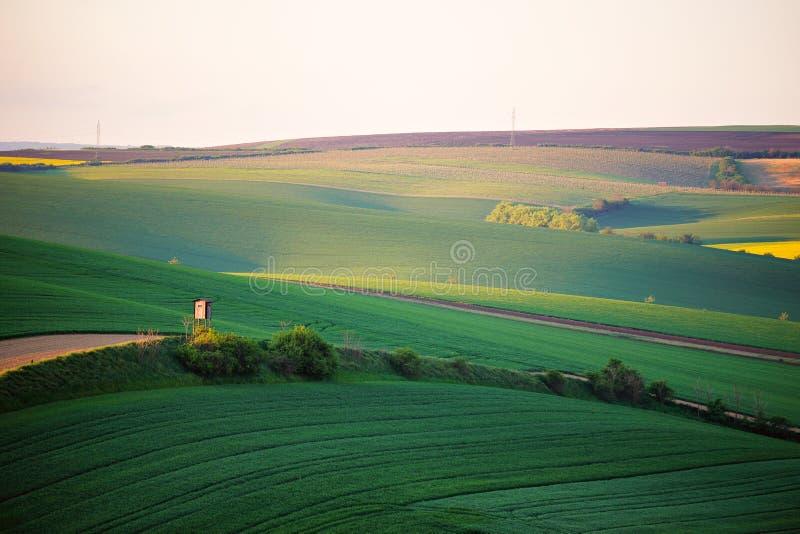 Campos verdes da mola Opinião ondulada bonita da mola Rolamento da mola fotografia de stock royalty free