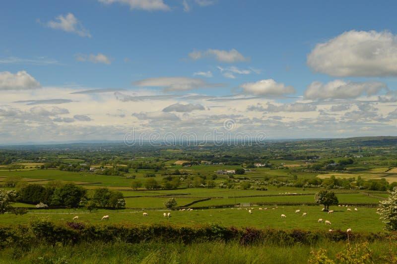 Campos verdes de Ireland fotos de stock